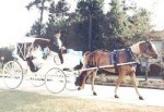 Seahorse & Classic Carriage Companies